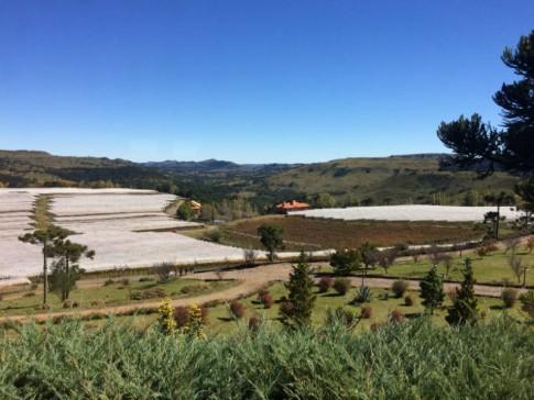 Parreirais de vinícolas em São Joaquim