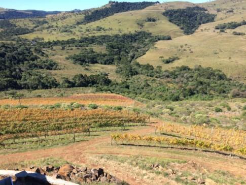 Belos parreirais das premiadas vinícolas de São Joaquim